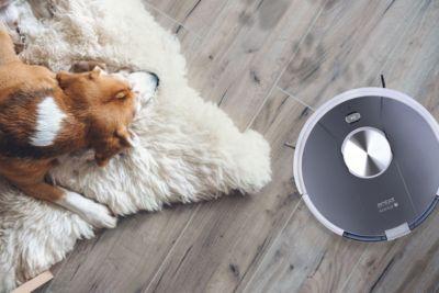 amibot animal motion avec chien