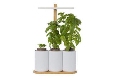 pret a pousser smart lilo jardin d 39 int rieur boulanger. Black Bedroom Furniture Sets. Home Design Ideas