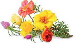 Recharge CLICK AND GROW Rose (lot de 3)