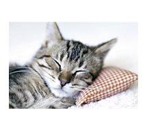 Tapis de souris Essentielb  Chat