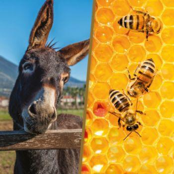 Smartbox Activité avec les animaux et parrainage