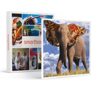 Smartbox Maîtrisez Photoshop : Cours en ligne ave
