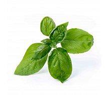 Recharge jardin intérieur Veritable  Basilic Grand Vert BIO