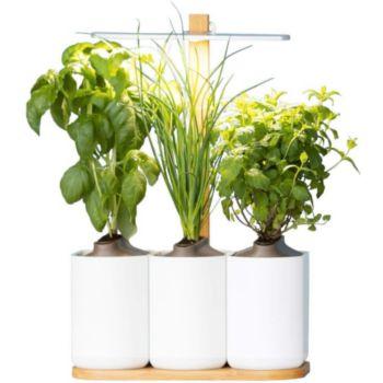 pret a pousser lilo jardin d 39 int rieur boulanger. Black Bedroom Furniture Sets. Home Design Ideas