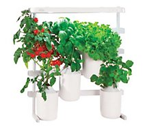 Recharge jardin d'intérieur Pret A Pousser  Mini tomates