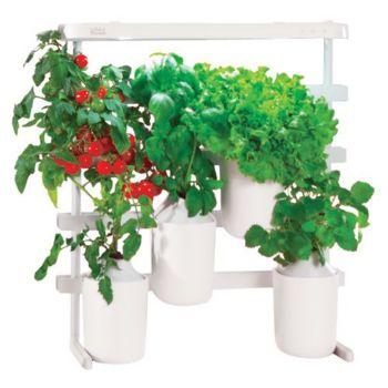 Pret A Pousser Mini tomates