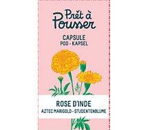 Recharge jardin d'intérieur Pret A Pousser  rose d inde