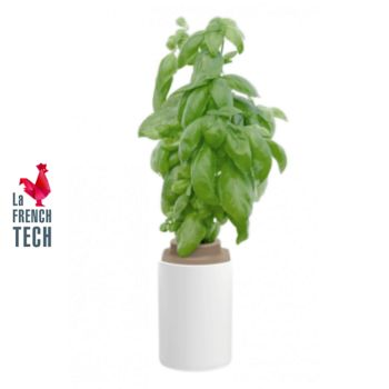 Pret A Pousser Basilic Grand Vert