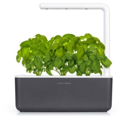 jardin d 39 int rieur plante d 39 int rieur boulanger. Black Bedroom Furniture Sets. Home Design Ideas