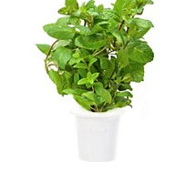 Recharge jardin intérieur Click And Grow  Menthe poivrée lot de 3