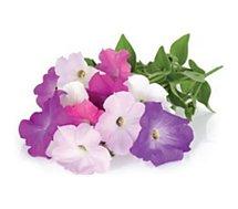 Recharge jardin intérieur Click And Grow  Petunia lot de 3